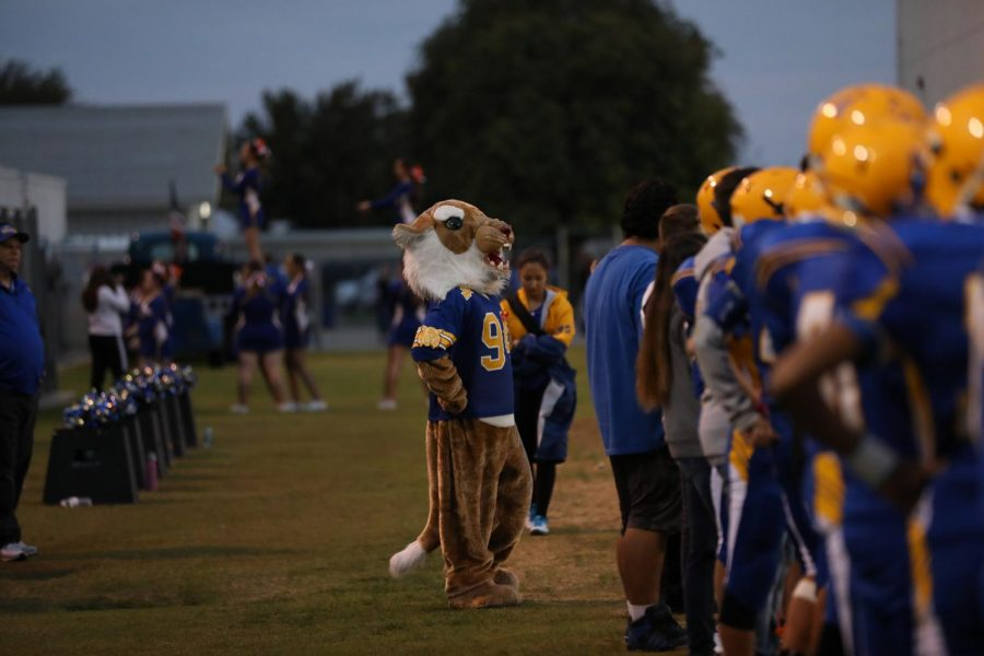 Wally the Wildcat