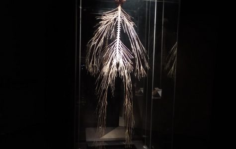 Plastination of the nervous system