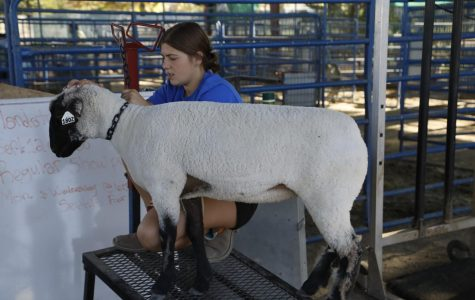 FFA gets ready for the Kern County Fair