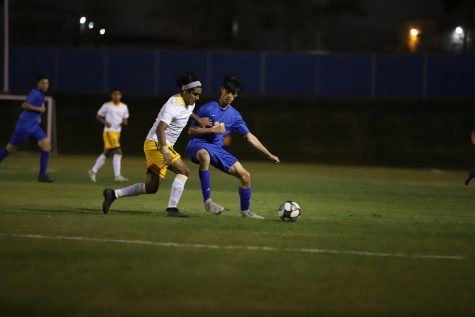 Lady 'Cats go on a winning streak